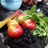 Crops! Rhubarb blackberries, apples, sage and rosemary