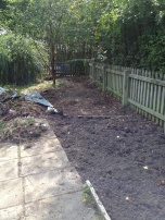 Ground clearance, digging out the brambles