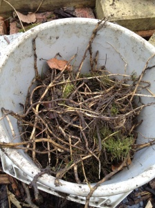 Bucket of bindweed root