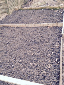 Dug over vegetable beds