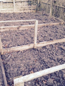 Two smaller brassica beds ready to be weeded