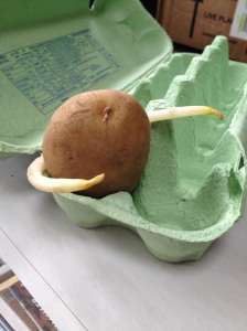 Posing potato