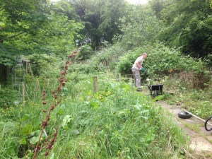 Dad drafted in again to help beat back the brambles