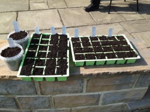 Next batch of seeds planted